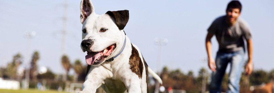 Un chien bien éduqué, c'est un chien et un maître heureux