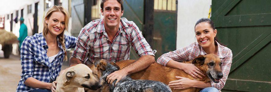 Conseils et recommandations pour les éleveurs de chiens