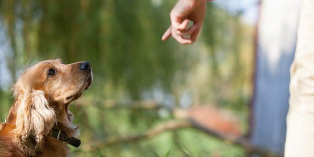Les méthodes les plus efficaces pour éduquer son chien