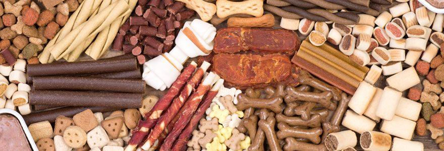 Croquettes pour chien ou pâtée pour chien : Que choisir ?