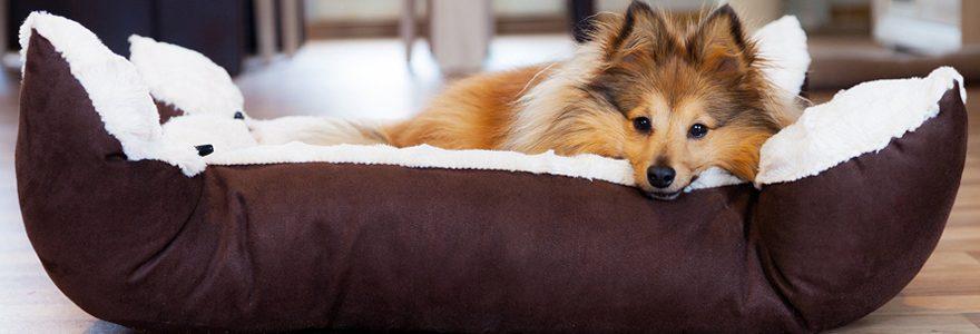 Achat de panier pour chien : profiter d'un comparatif en ligne pour mieux choisir
