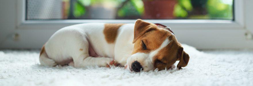 Comment créer un bon environnement pour un chien ?