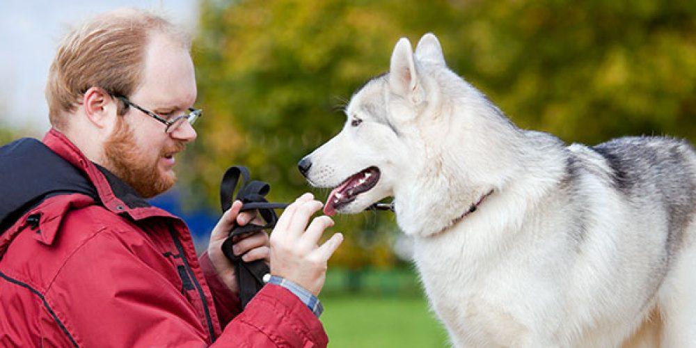 Améliorer votre relation avec votre animal grâce à un éducateur canin à Toulouse